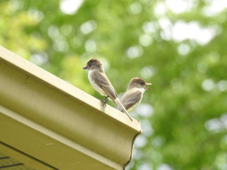 Maine birds eating