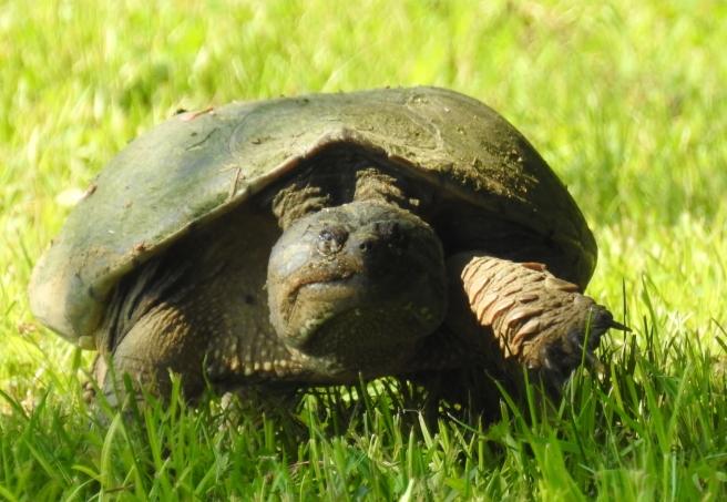 turtle mission